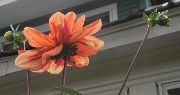 orange underneath
