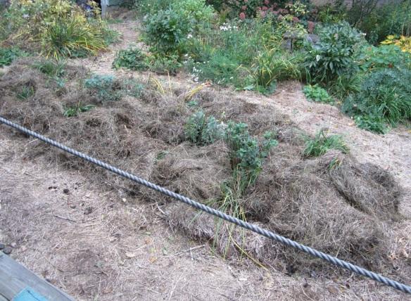 blanketed front yard garden