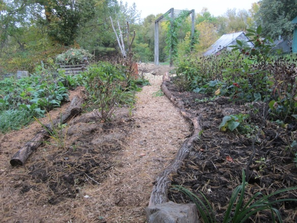 "square garden main path, with a new ""log"" border and added compost."
