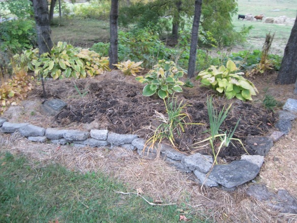 renovated pine tree garden