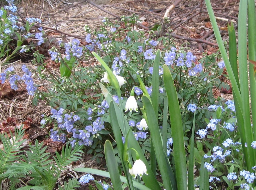 summer snowflake with Jacob's ladder
