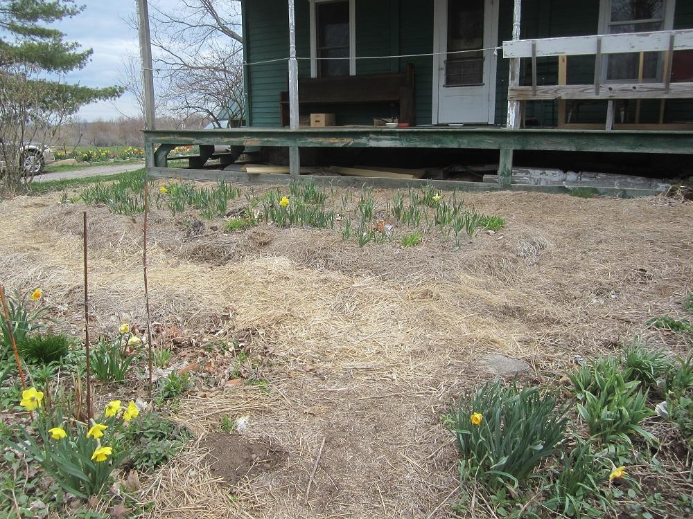 top of front yard no wall