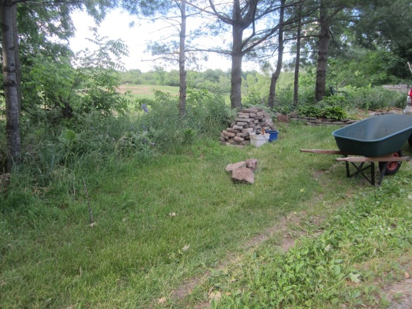 """the pile of Thelma rocks and the """"overflow garden"""" where I throw extra plants."""