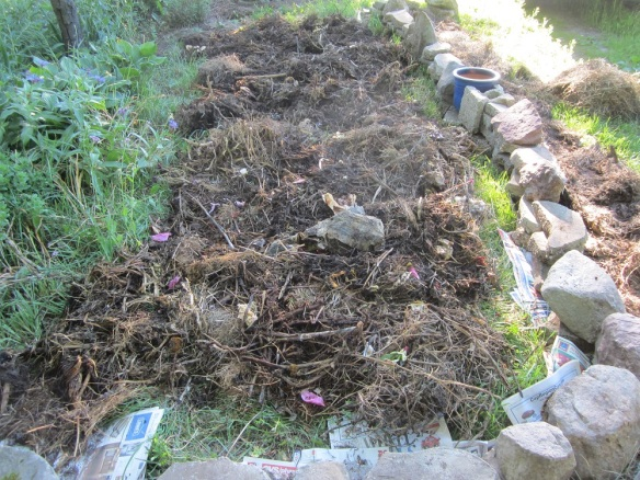 The next morning (that is, this morning) I forked the entire compost bin of mostly composted stuff into the new bed, right on the grass. It was three loads altogether.