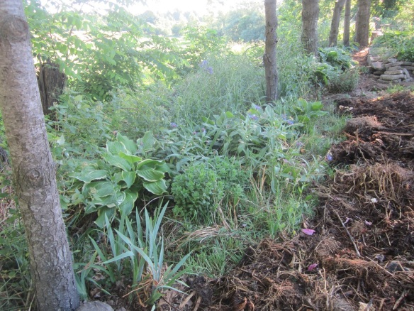 """In this picture you can see the newly-laid compost and also the """"overflow garden"""" in the back, under the pine trees."""