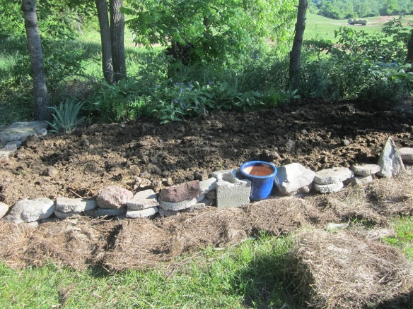 Here is the garden with the manure in place. On our way home today we are stopping for a load of wood shavings from the SLU stables, to put on top of this.
