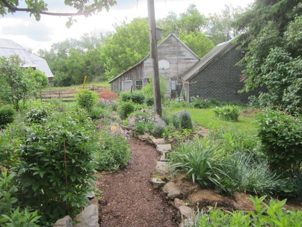 back yard panorama June 6