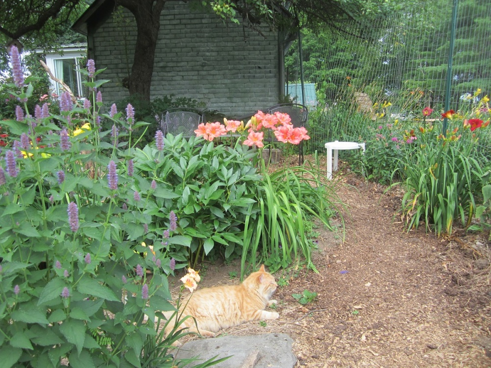 cat with lilies