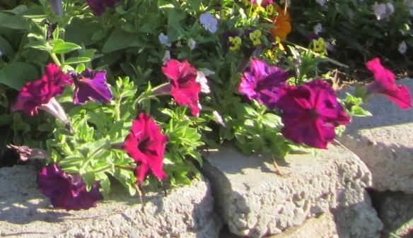 flower jumble