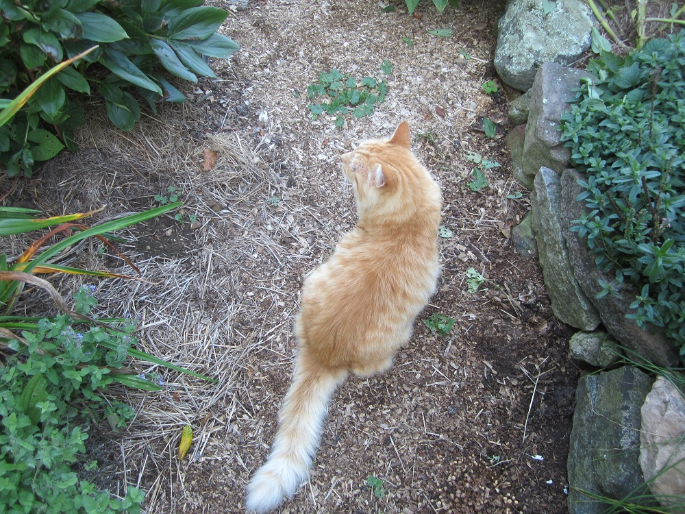 cat-on-the-walk