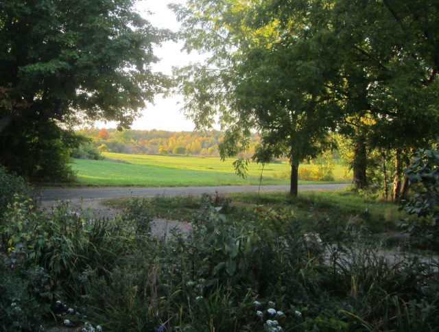 sunny-meadow-late-afternoon