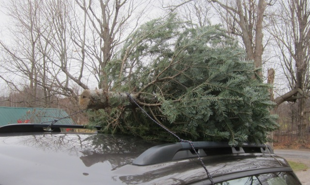 a sign of the times: we brought home a tree-farm fir tree last weekend. Happy Holidays!