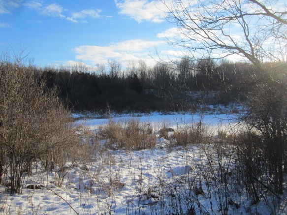 the old beaver pond