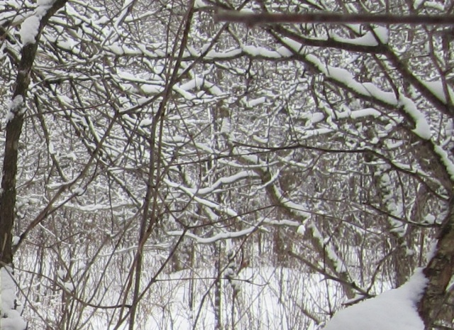in other places it's impossible to get through without a lot of clearing and pruning.
