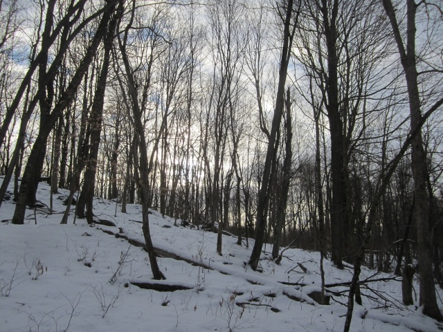 In the mature woods there's no need for trail-making because there is no undergrowth or shrubby stuff