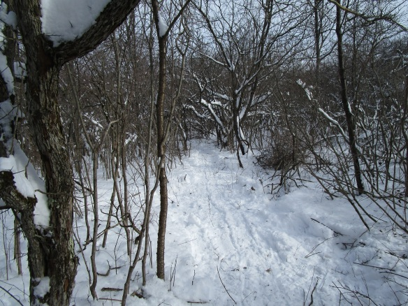 another picture of the trail.