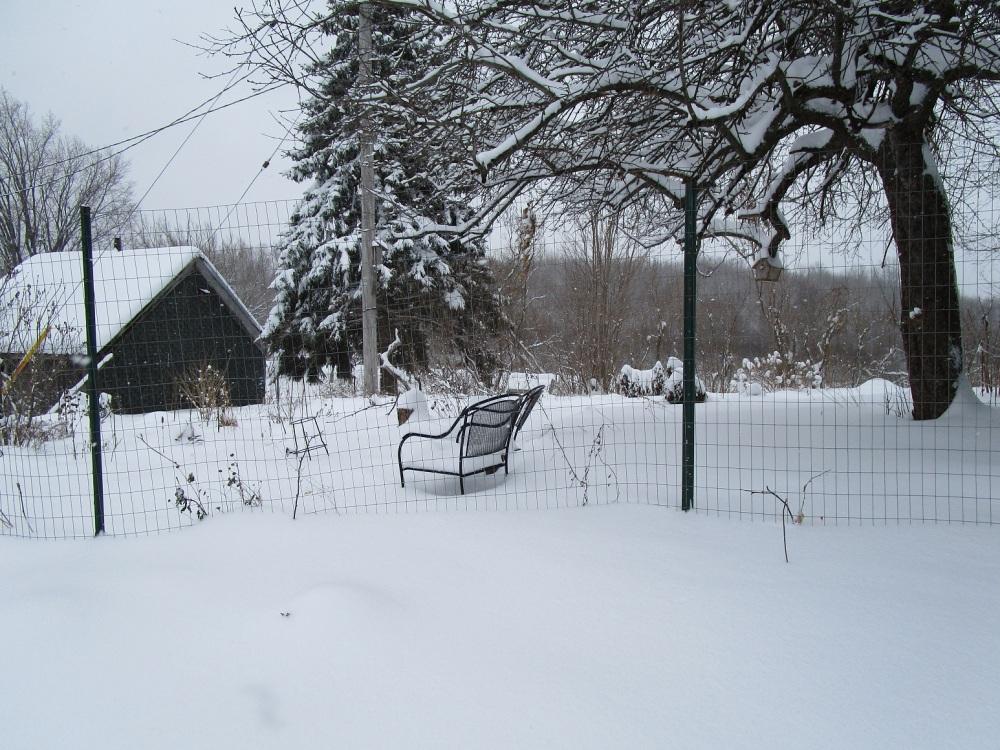 The back yard yesterday morning