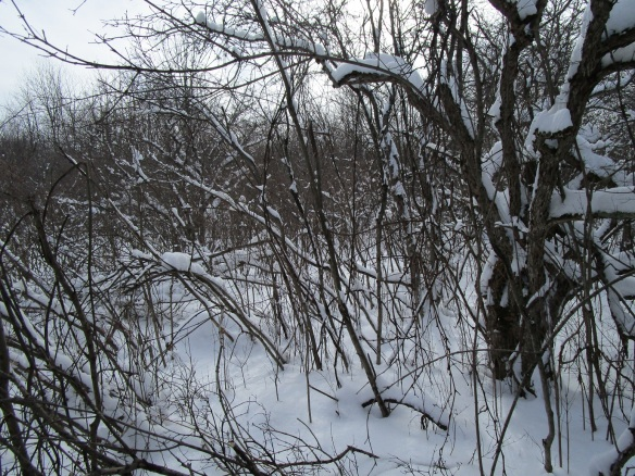 a lot of brambles and dogwood thickets to cut through.