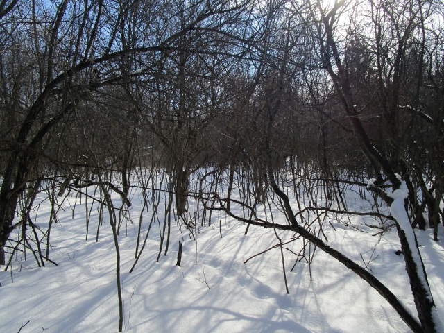 In the sunshine branches make patterns of shadow on the snow.