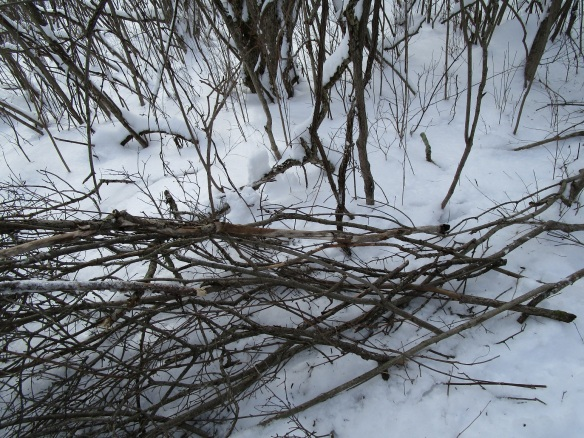 dogwood branches piled up along the new trail