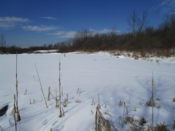 old-beaver-pond