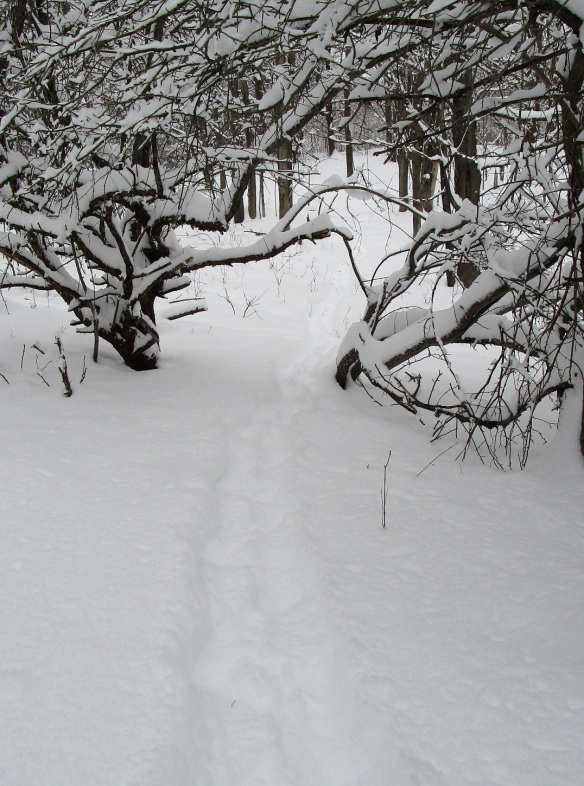 first I headed out over the existing trails. I turned around to take this picture of my tracks.