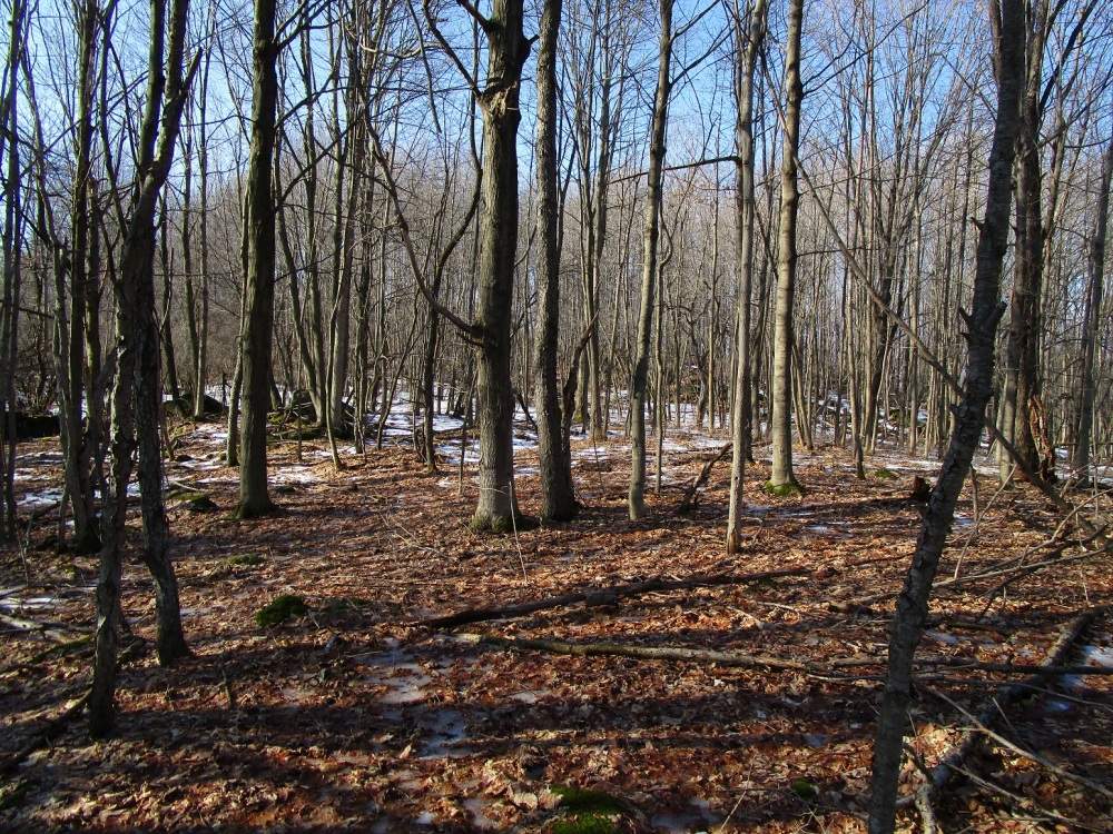 beaver-pond-overlook-grove