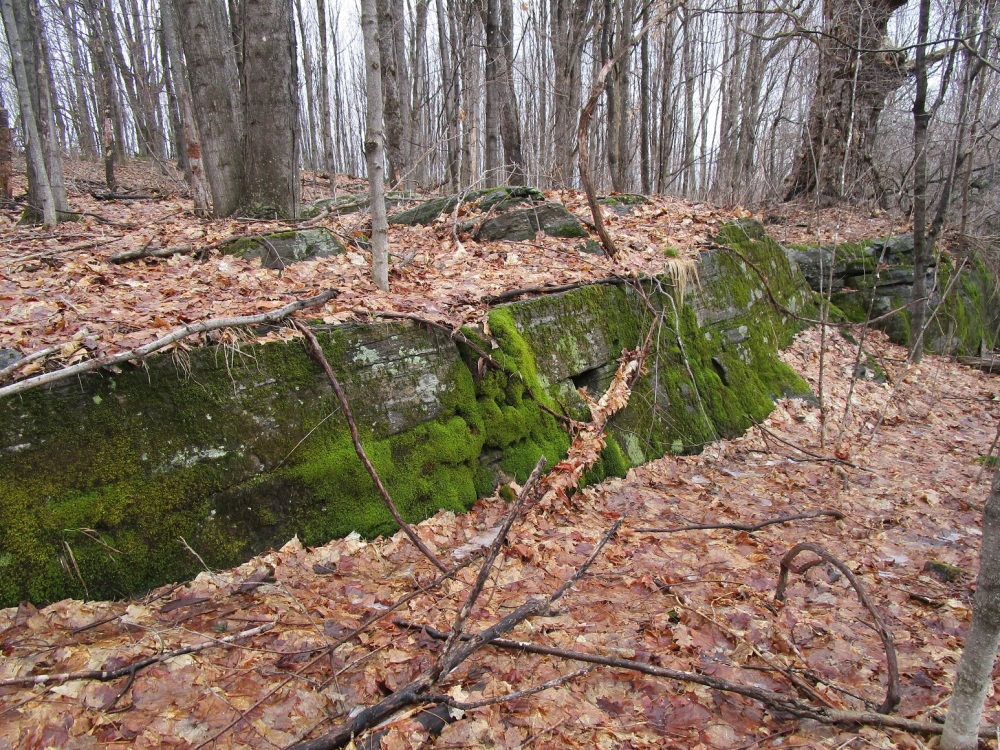 mossy-shelf-and-old-maple