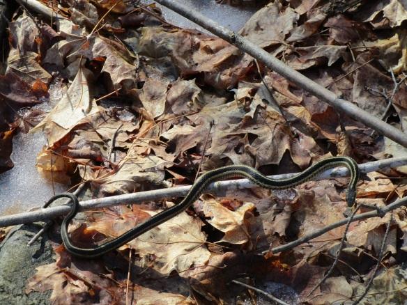 snake-close-up