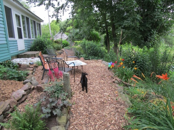010 path patio with cat